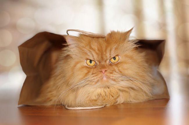 Гарфи - суровый кот, смотрящий на тебя, как на мышь