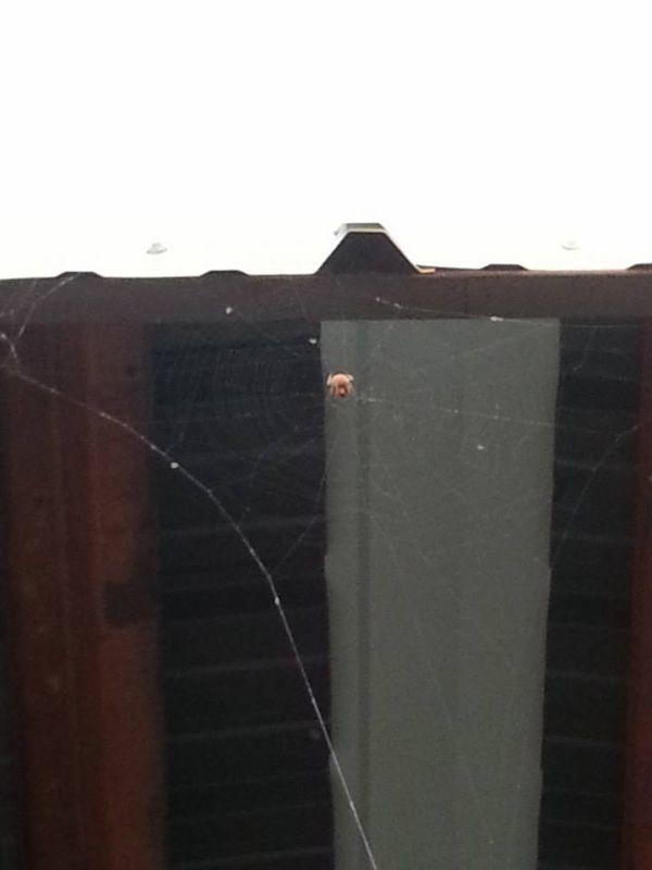 Как пауку сплести паутину на ровной планке
