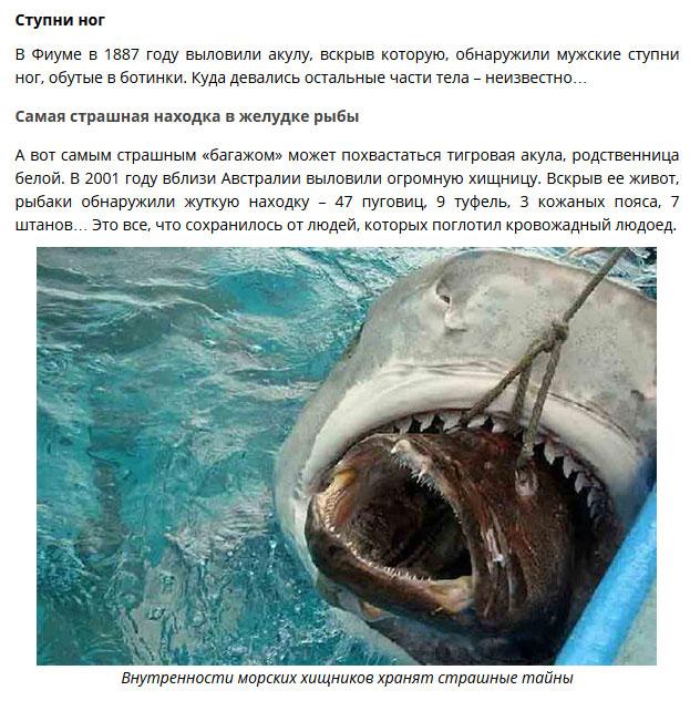 Удивительные находки в желудках акул