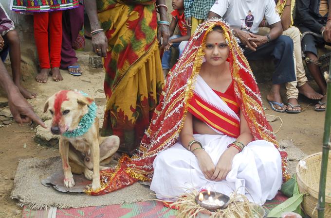Выдали замуж за собаку