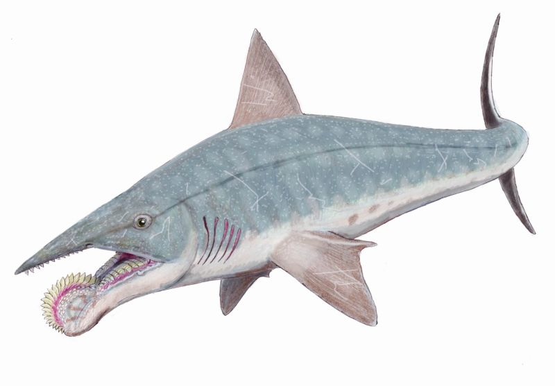 Акула с циркулярной пилой