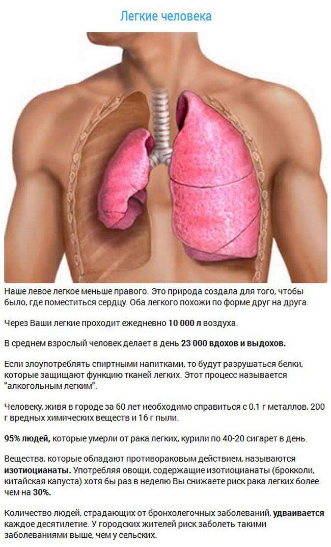 Интересные факты о внутренних органах