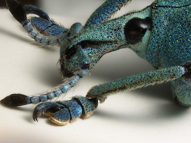 Фото под микроскопом Nikon Small World 2014