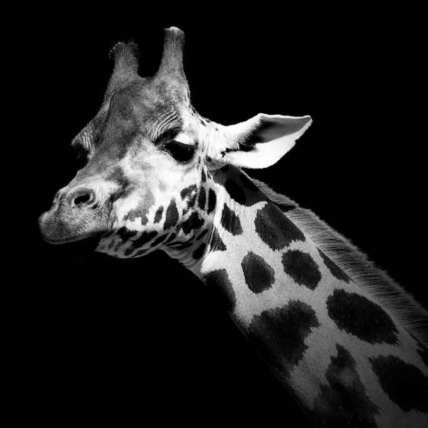 Животные из зоопарков