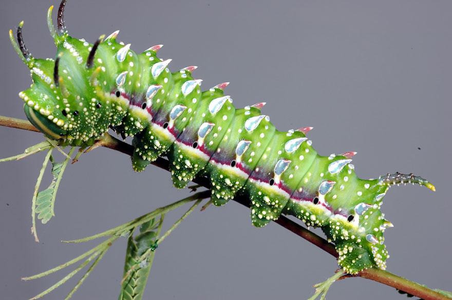 Трансформация из гусеницы в бабочку