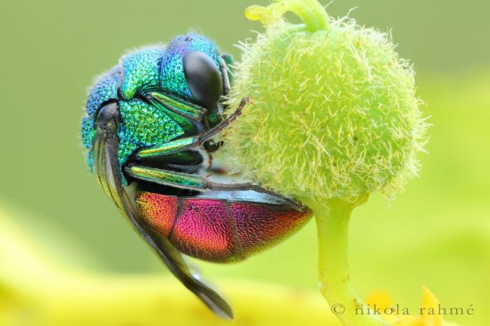 Яркие существа нашего мира