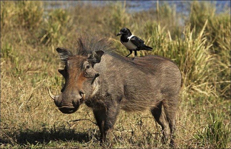 Дружба между разными животными