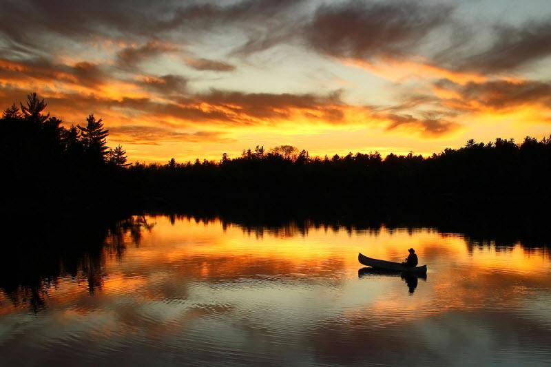Фотографии дикой природы с конкурса Wilderness Forever
