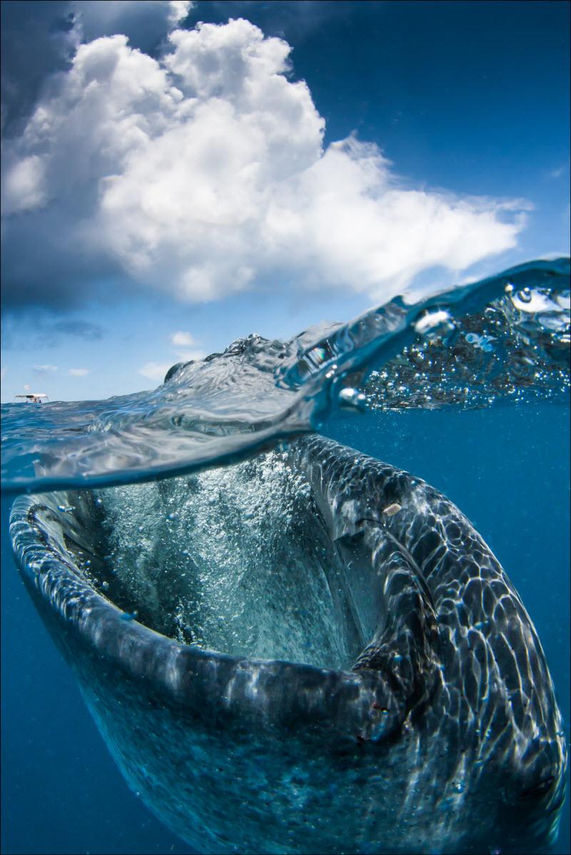 Полу-подводные фото со всего мира