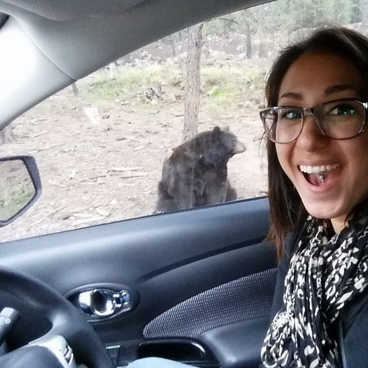 Селфи с медведями