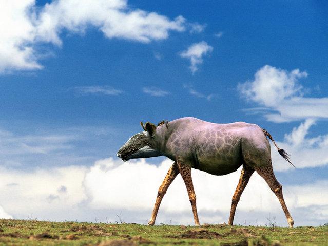 Гибриды животных от калифорнийской фотохудожницы