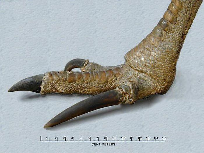 Казуар - большая и опасная птица
