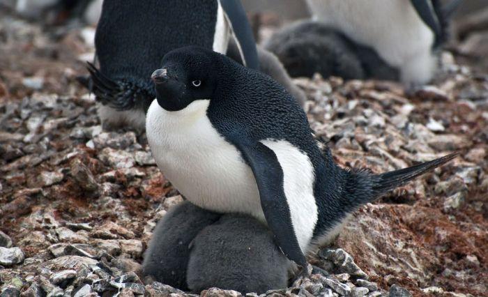 Океанский круиз по побережью Антарктиды