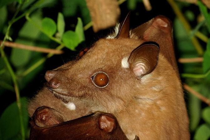 13 самых страшных животных по версии фонда дикой природы