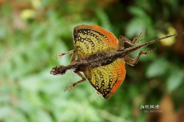 10 животных тропического леса