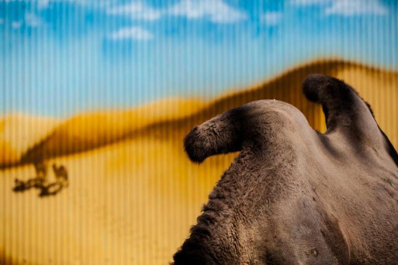 Животные и жизнь в неволе