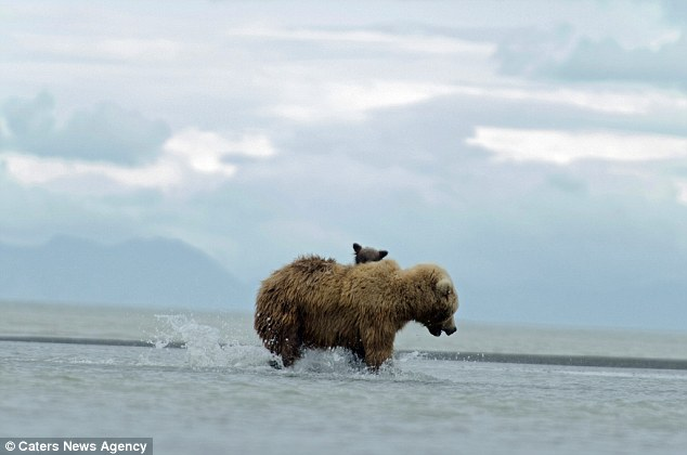 Медвежонок на маминой спине