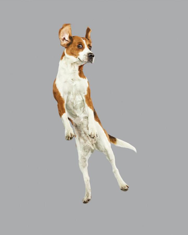Собаки и батут