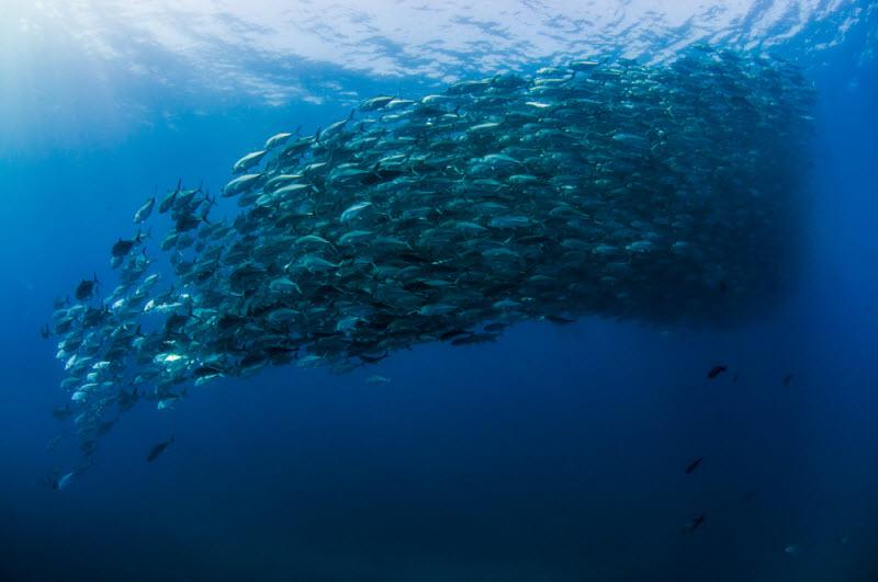 Внутри вихря из рыбы