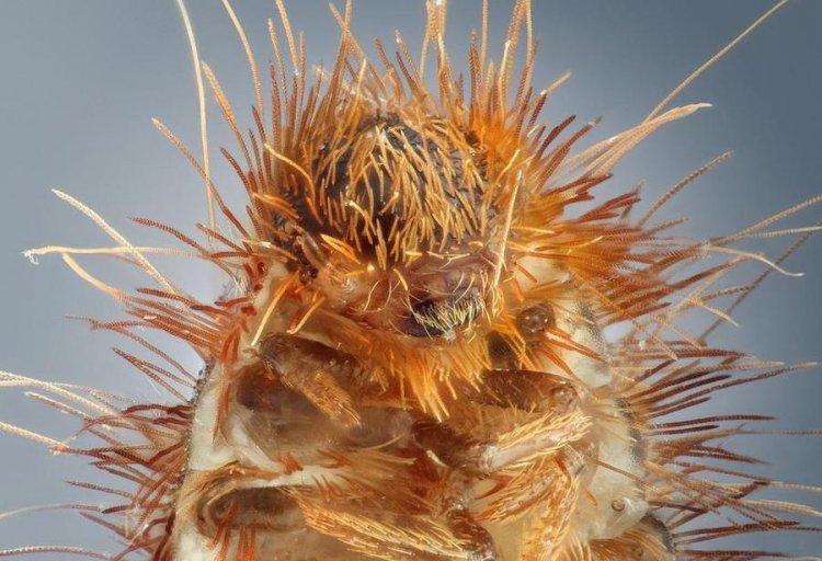 Макропортреты самых обыкновенных насекомых