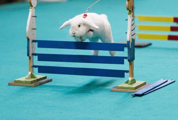 Кроличьи бега с препятствиями