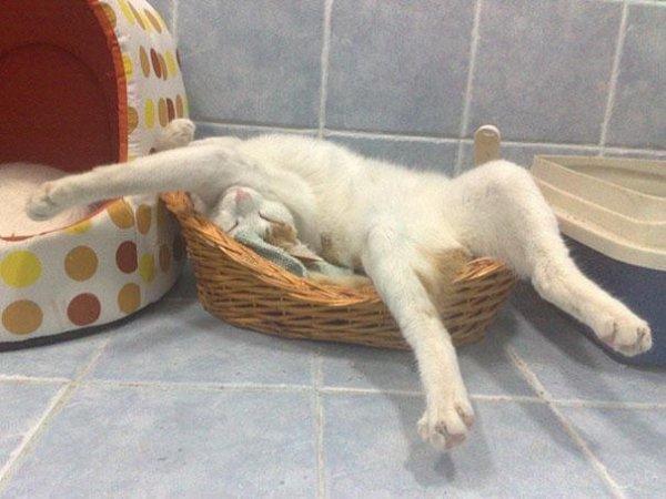 Котейки отдыхают везде