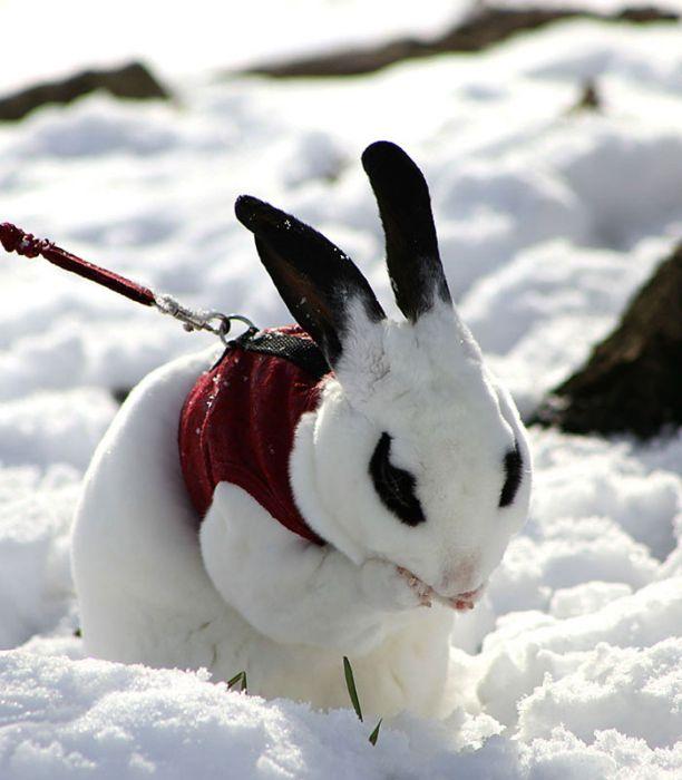 Знакомство животных со снегом