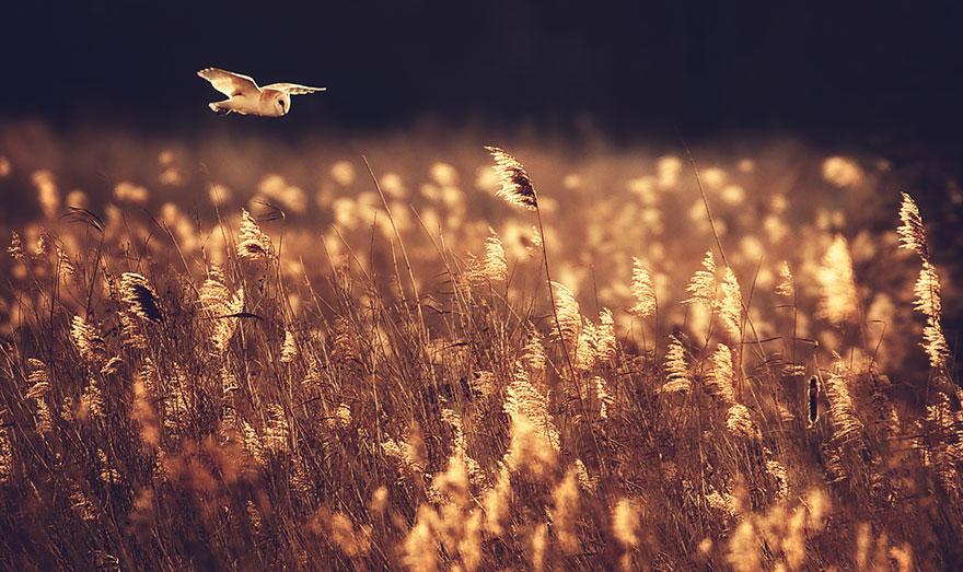 Насколько совы могут быть милы