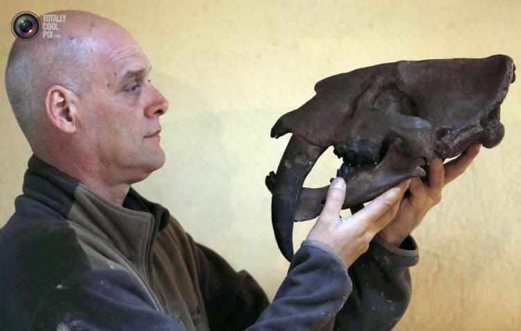 Репродукции ископаемых животных в натуральную величину