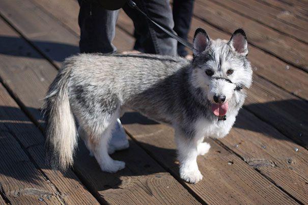 Смешение собак разных пород