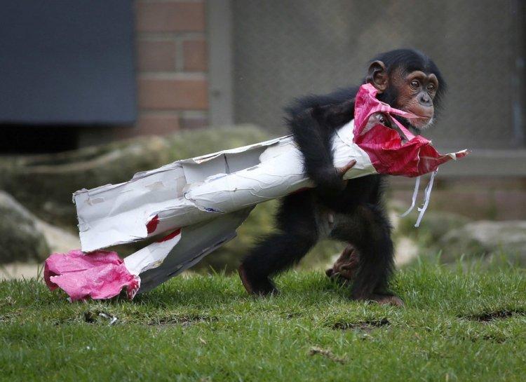 Рождественские подарки для животных в зоопарке Сиднея