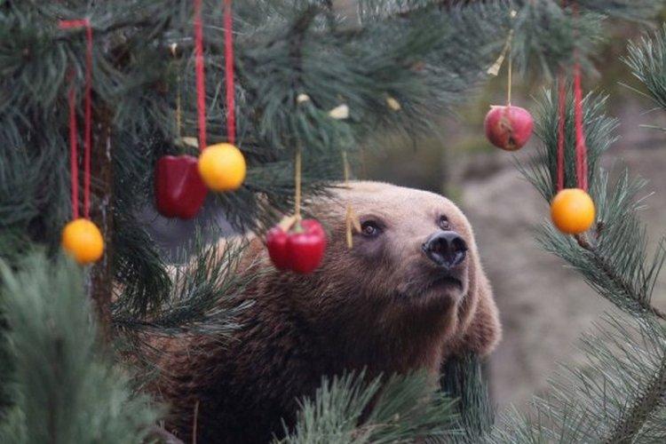 В Гамбурге установили праздничную елку для медведей
