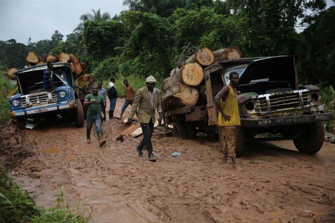 Как заготавливают лес в Нигерии
