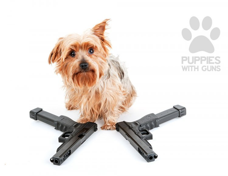 Календарь щенки и оружие