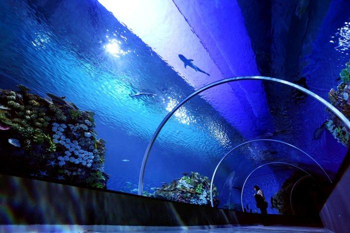 Океанариум Голубая планета в Дании