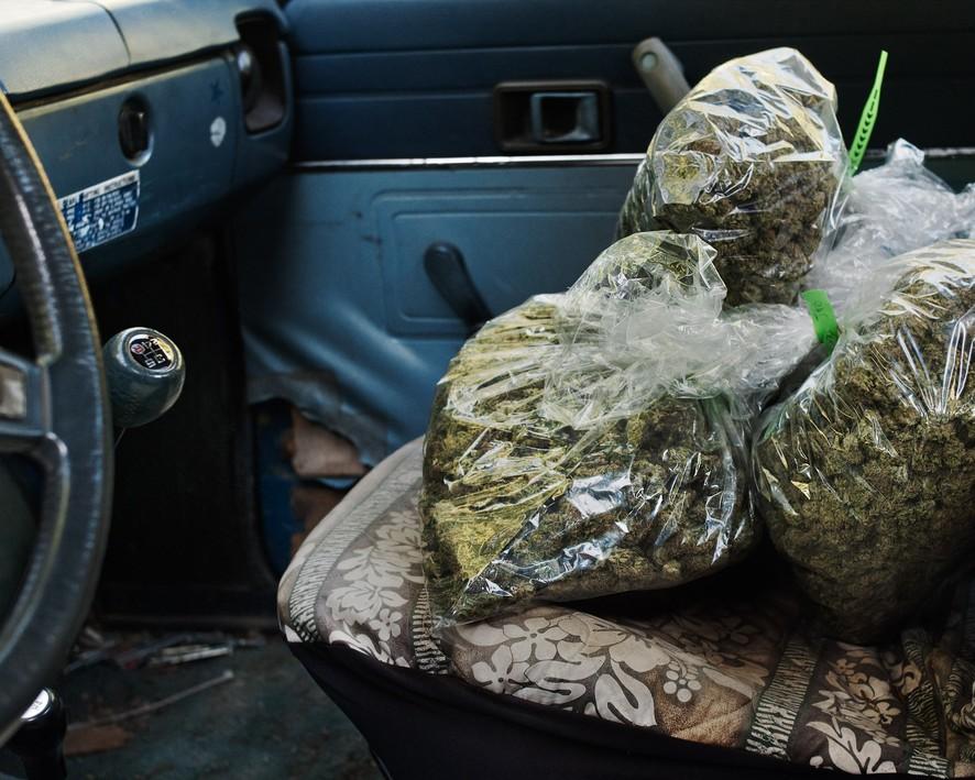 Фермеры, выращивающие марихуану