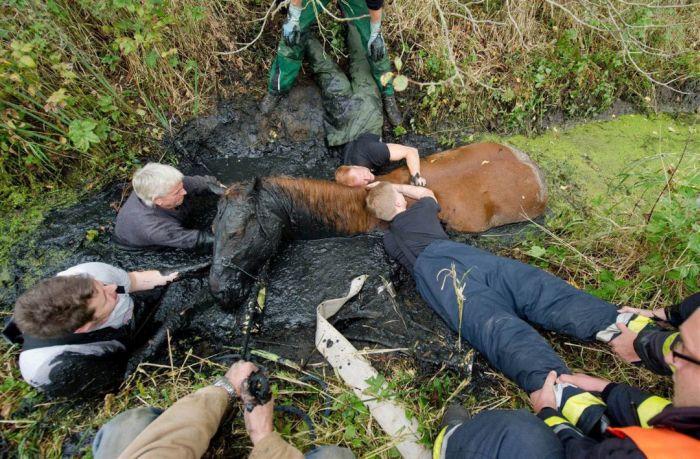 Достать лошадь из болота