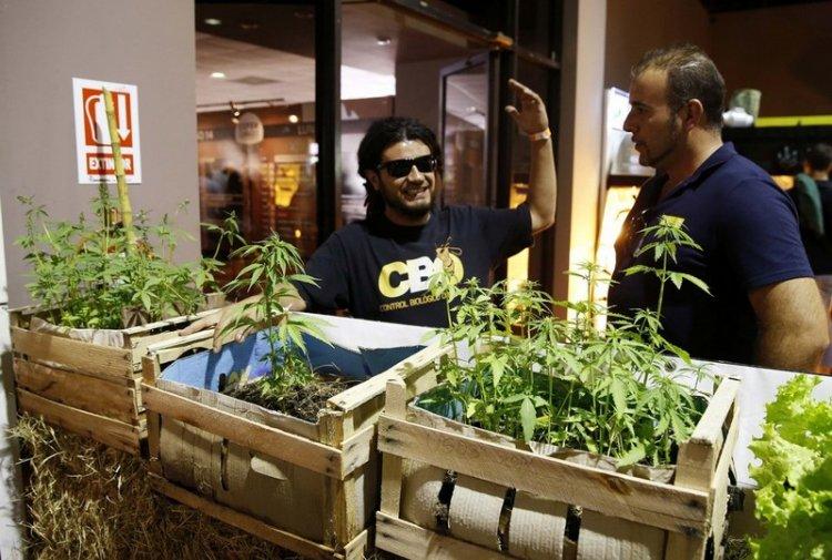 Expo Cannabis ярмарка в Уругвае