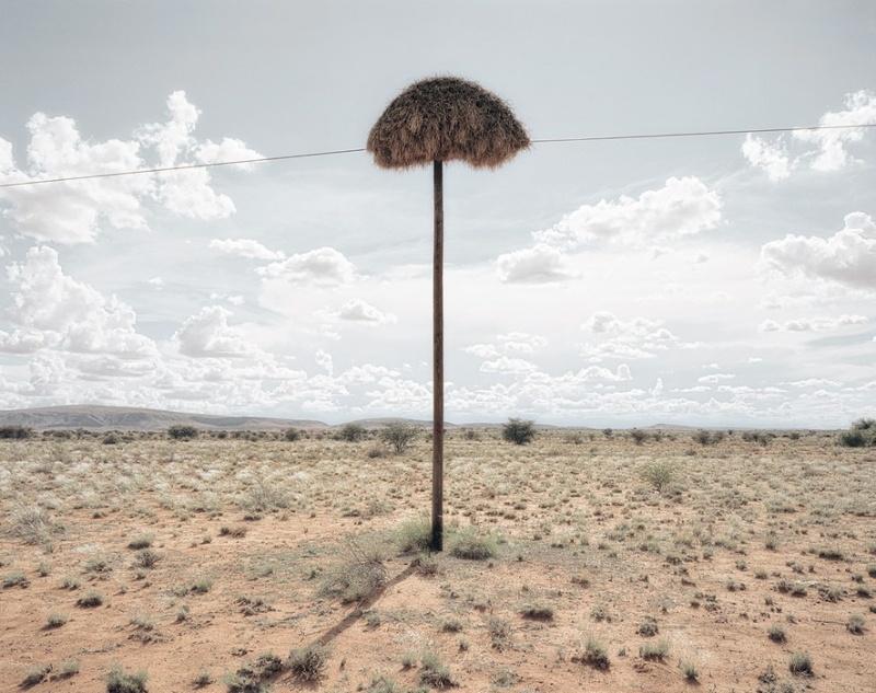 Гнезда на телефонных столбах