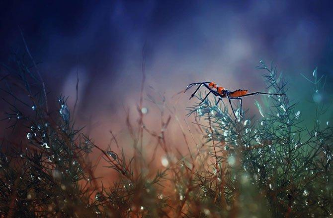 Сказочные фото Harfian Herdi