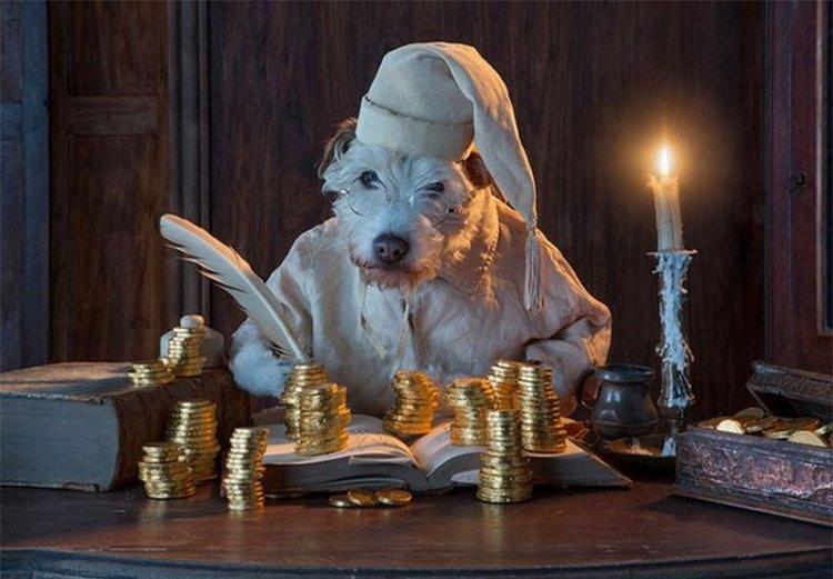 Перевоплощение собаки на Новый год
