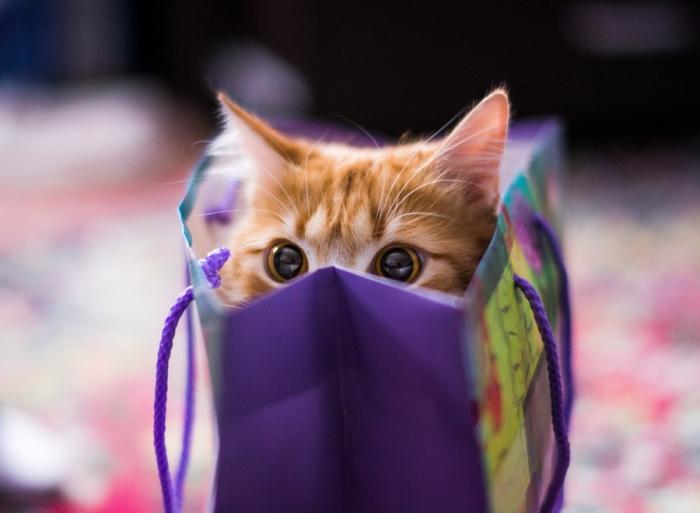 Лучшие фотографии кошек за 2014 год