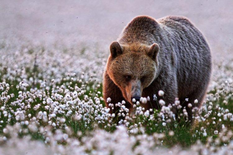 Лучшие фотографии природы за 2014 год