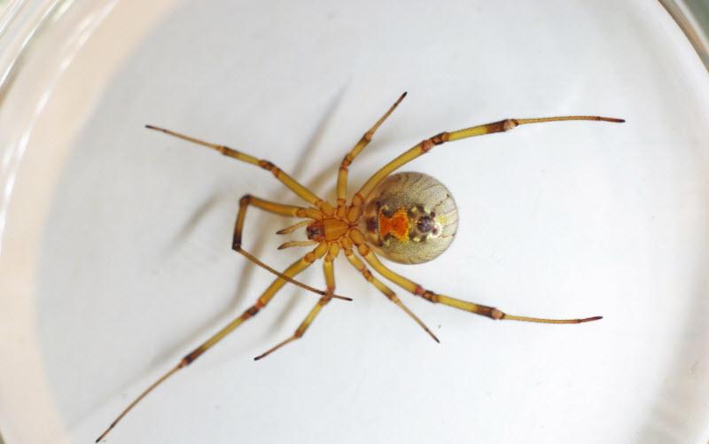15 самых опасных пауков в мире