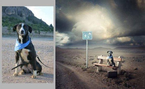 Сюрреалистичные пейзажи в помощь бездомным животным
