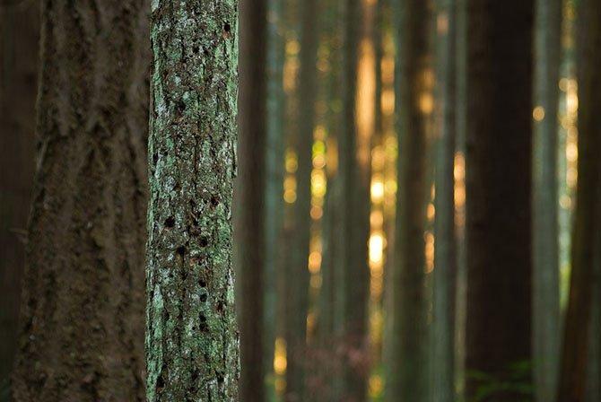 Природная абстракция от фотографа Торстена Шойермана