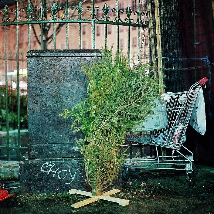 Выброшенные елки на улицах Парижа