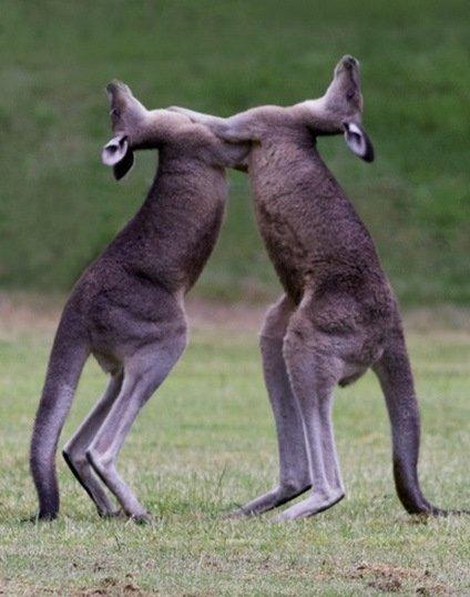 10 фотографий животных в медленном танце