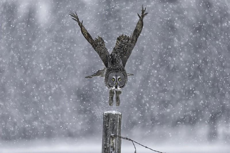 Совы зимой