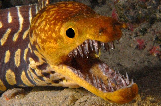 Ужасающие пасти подводных обитателей